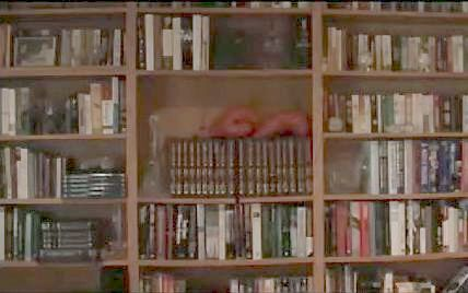 File:Full shot of bookshelf.jpg